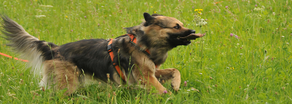 Belohnung im Hundetraining