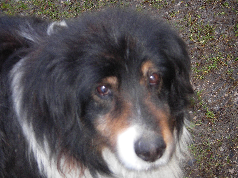 Mein alter Hund Teil 4