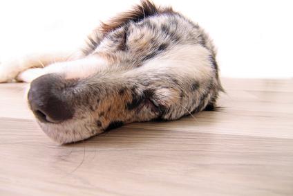 Entspannungstraining im Hundetraining