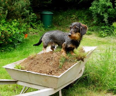 Buddelhilfe im Garten