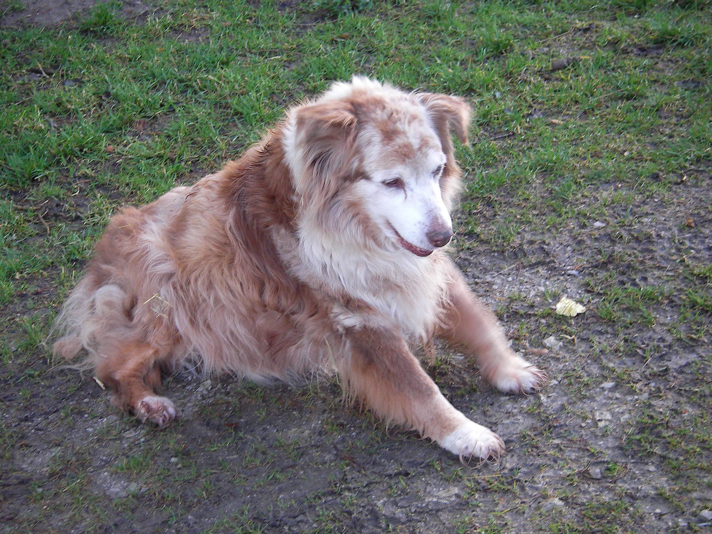 Mein alter Hund Teil 1