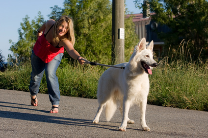 8 Gründe, warum dein Hund an der Leine zieht