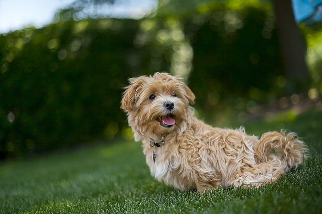 Tipps für den Urlaub ohne Hund