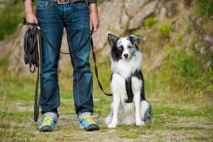 Hund an der Schleppleine