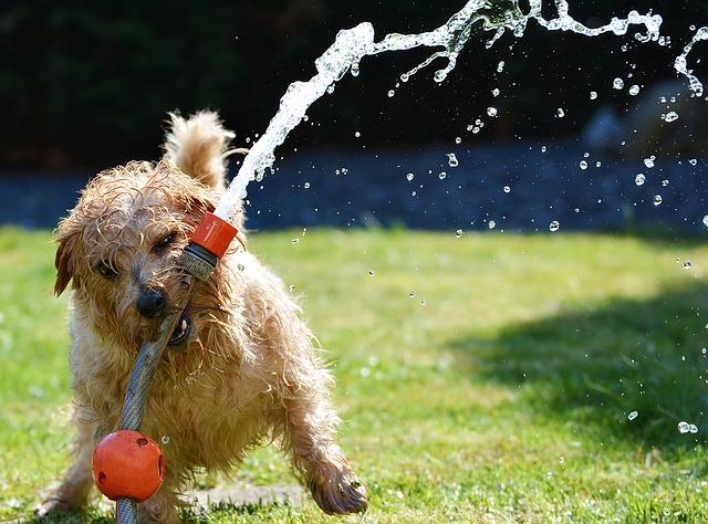 5 Dinge, die du täglich mit deinem Hund tun solltest.