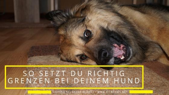So setzt du richtig Grenzen bei deinem Hund