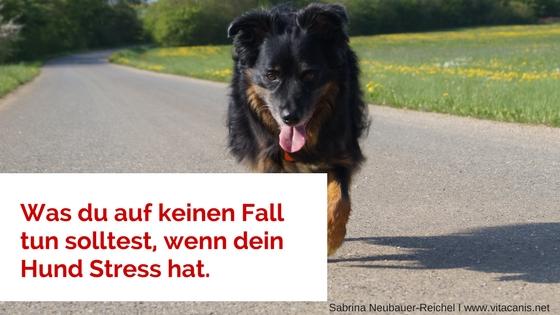 Was du auf keinen Fall tun solltest, wenn dein Hund Stress hat.