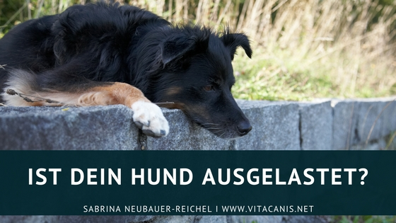 Ist dein Hund ausgelastet?