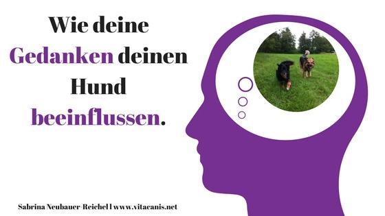 Deine Gedanken – erfolgreiches Hundetraining