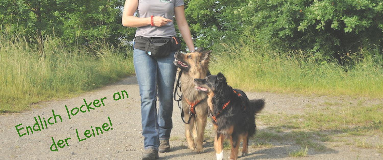 Leinenführigkeit Lockere Leine Hund zieht an LeineOnline Training Belohnungslostrommel Hundeerziehung Hundetraining