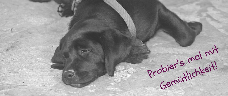 hibbeliger Hund Entspannung Entspannungstraining aufgeregter Hund Online Training Belohnungslostrommel Hundeerziehung Hundetraining