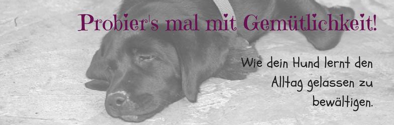 Online Hundetraining Hund aufgeregt hibbelig unruhig hektisch Stress beim Hund