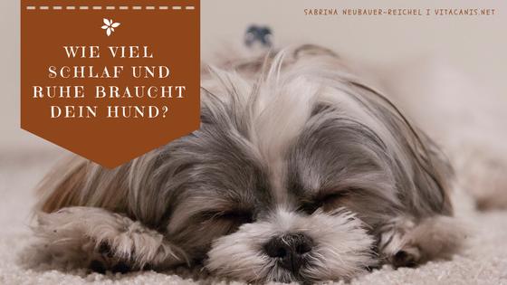 Wie viel Schlaf braucht ein Hund?