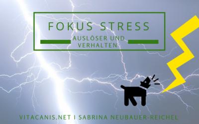 Fokus Stress – Auslöser und Verhalten bei Stress