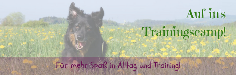Lieblingshund-Training Online Hundetraining Online Hundeschule Hundetraining Hundeerziehung Club Trainingscamp