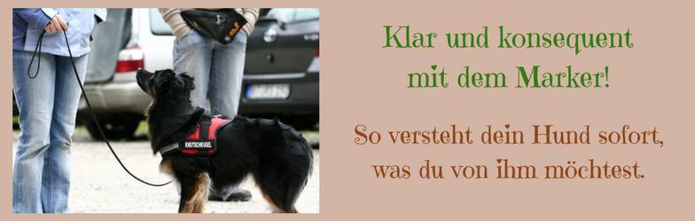 Markertraining Klickertraining Marker Onlinekurs Online Hundeschule Hundetraining