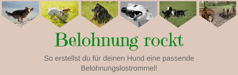 Onlinekurs Onlinetraining Online Hundetraining Belohnung Belohnungslostrommel
