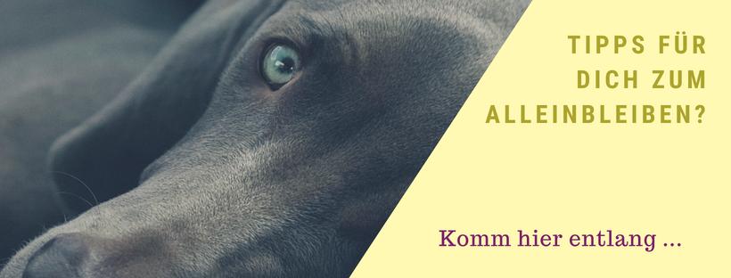 Alleinbleiben Lieblingshund-Training Online Hundeschule Hundetraining