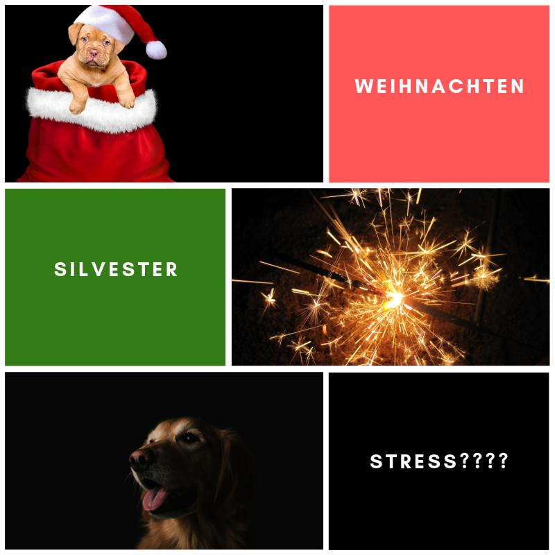GRATIS Videoserie Weihnachts- und Silvestertrubel