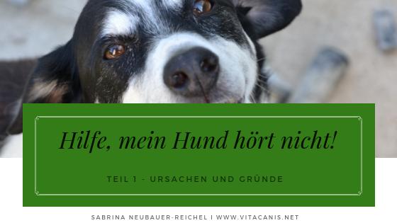 Hilfe, mein Hund hört nicht (Teil 1)