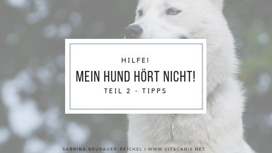 Hilfe, mein Hund hört nicht (Teil 2)