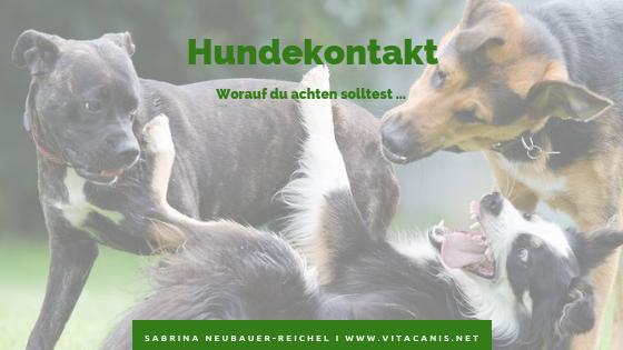 Hundekontakt – worauf du achten solltest.