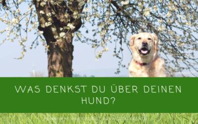 Was denkst du über deinen Hund?